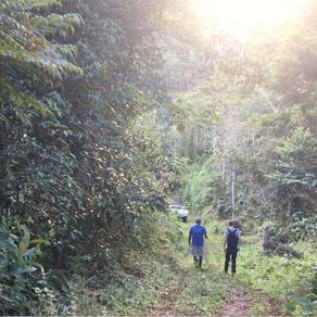 La forêt au service du café et des Hommes