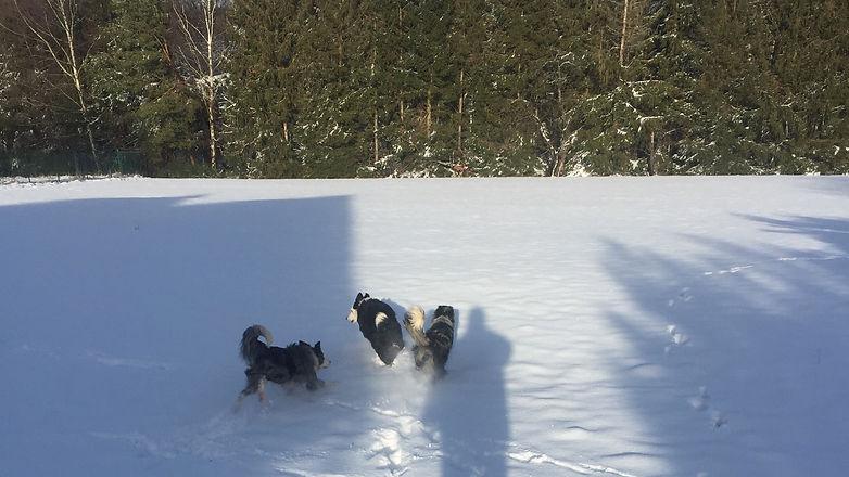 Chiens dans la neige 2019 (2)_edited.jpg