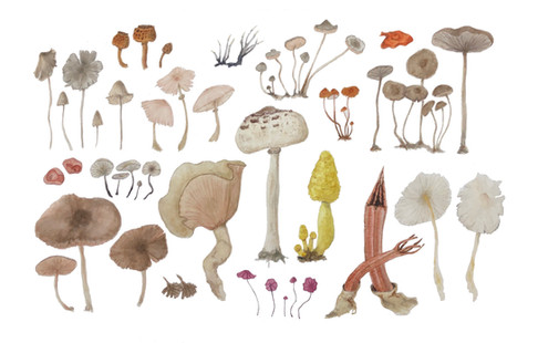 Fungi #1