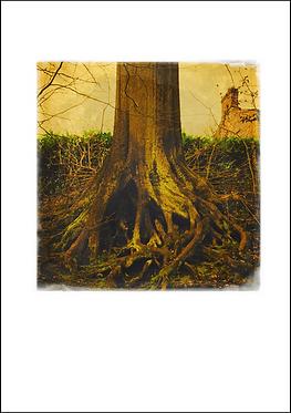 Tree Roots - A3 Fine Art Print