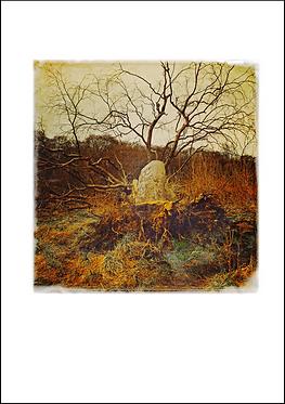 Fallen Tree - A3 Fine Art Print
