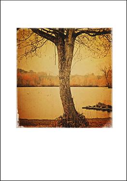Tree - A3 Fine Art Print
