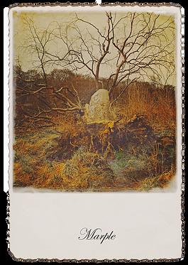 Marple Walks Collection - Fallen Tree Brabyns Park