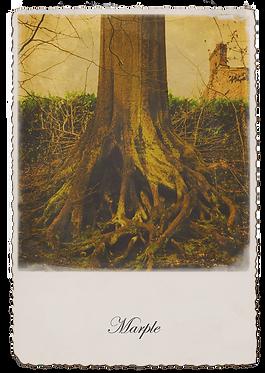 Marple Walks Collection - Tree Roots