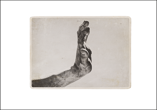 Hand #1 - A3 Fine Art Print