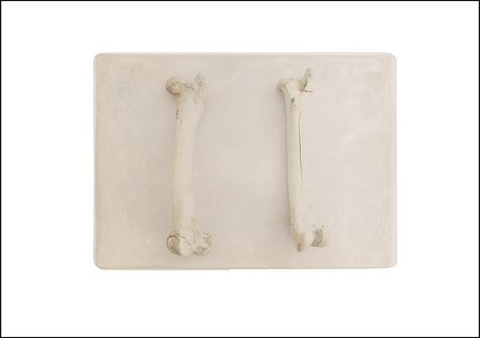 Bones - A3 Fine Art Print