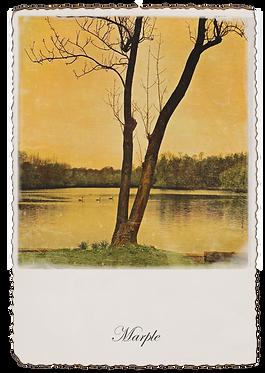 Marple Walks Collection - The Roman Lakes #3