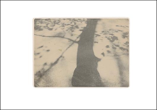 The Tree Shadow - A3 Fine Art Print