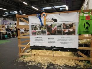 """""""Alpakazuchtshow 2017 in Erfurt"""""""