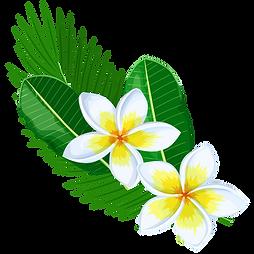 white Plumeria.png