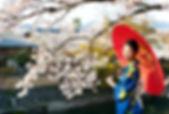 桜の日本人女性