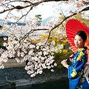 Mulher japonesa na flor de cerejeira