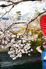 Japan experience culture & lifestyle tour