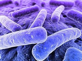 legionella-bacteria-sante-tunisie.jpg