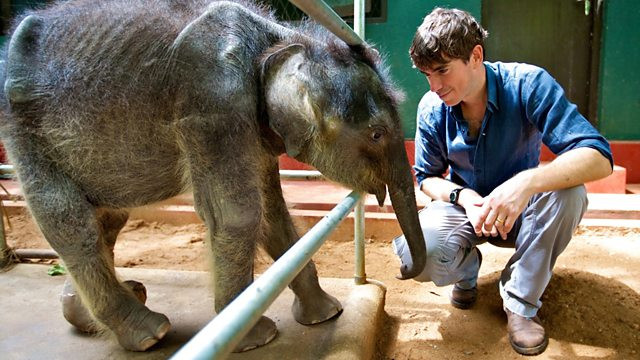 Simon Reeve squats next to a injured baby elephant in Udawalawe Sri Lanka