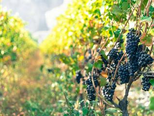 EV100 Shveitsi vein ja Mikita