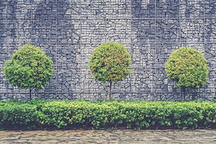 retaining-wall-hedging.jpg