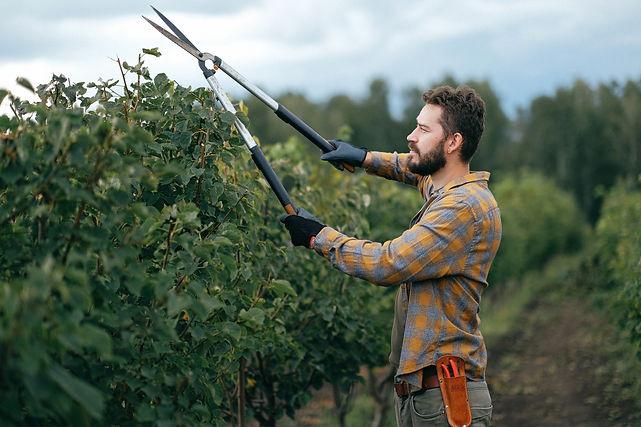 Hobart-garden-maintenance-services.jpg