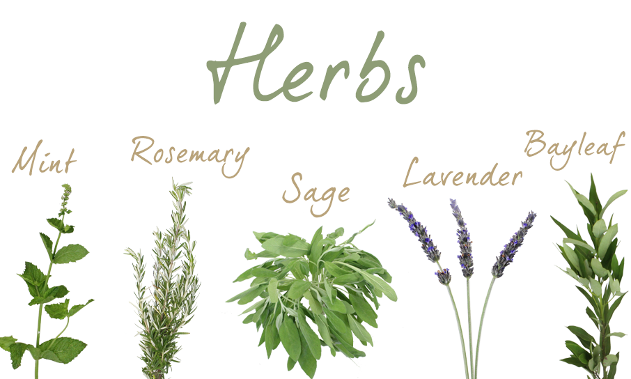 Herbs-Feature-1