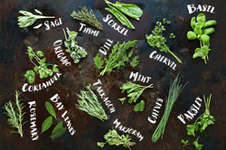 Herb-Feature-Image