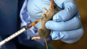 LASSA FEVER: A NAME DERIVED FROM A TOWN IN NIGERIA