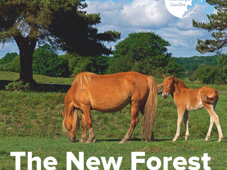 The New Forest – A Souvenir Guide