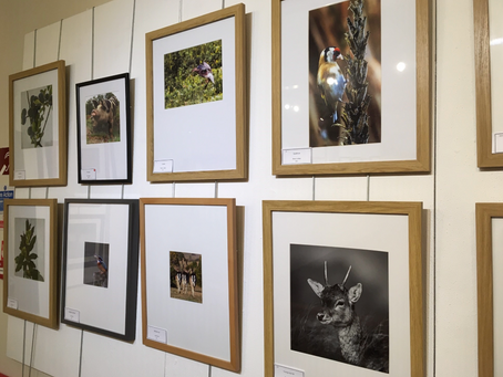 New Forest Camera Club Exhibition – New Forest Heritage Centre