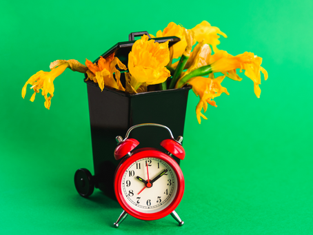Tired of Tossing Tulips in the Trash Next Morning?