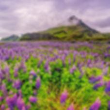 My photo taken somewhere in Iceland. #ro