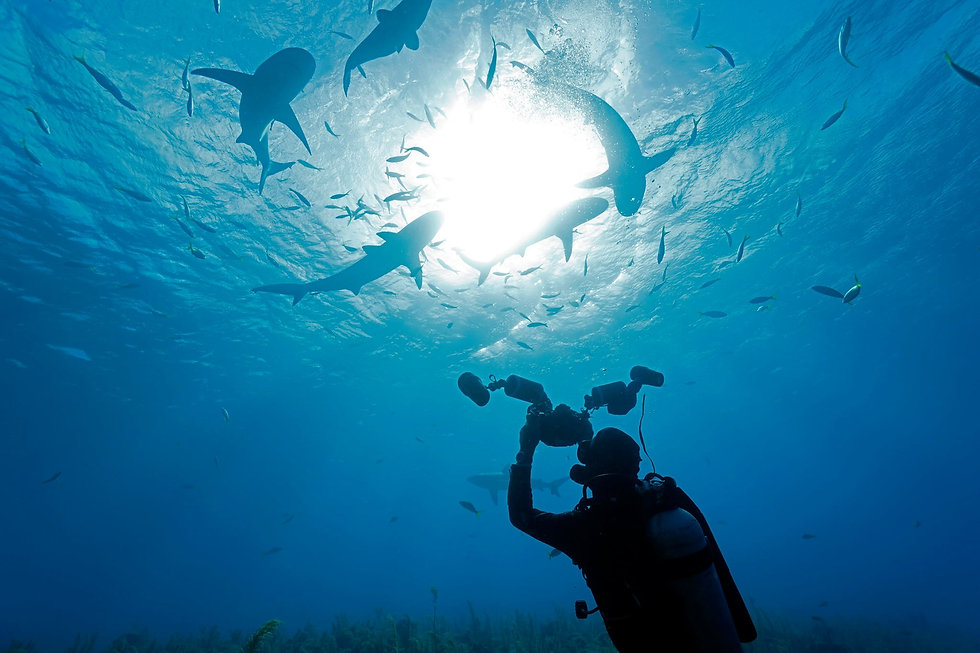 diving hk 香港潛水課程 fun dive SSI