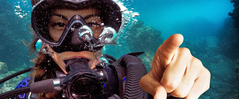 dive_professional_crossover_1200x500_mys