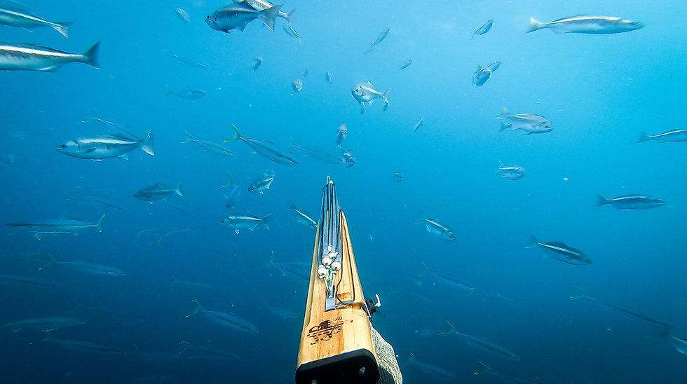 spearfishing hk
