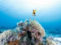 Diving Hong Kong_HK_香港潛水 (17).jpg