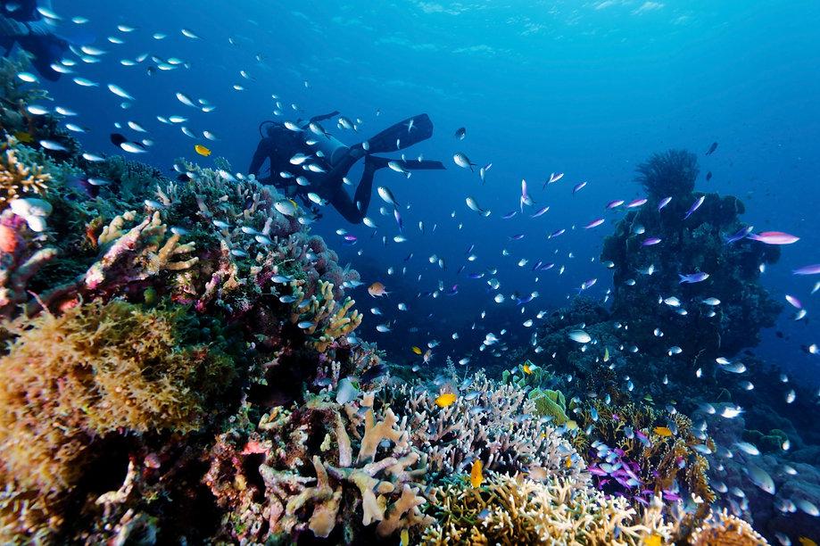 初級潛水課程diving hk