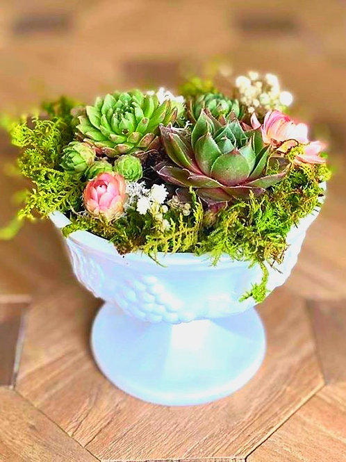 vintage milk glass compote w/ hens and chicks, preserved florals and mosses