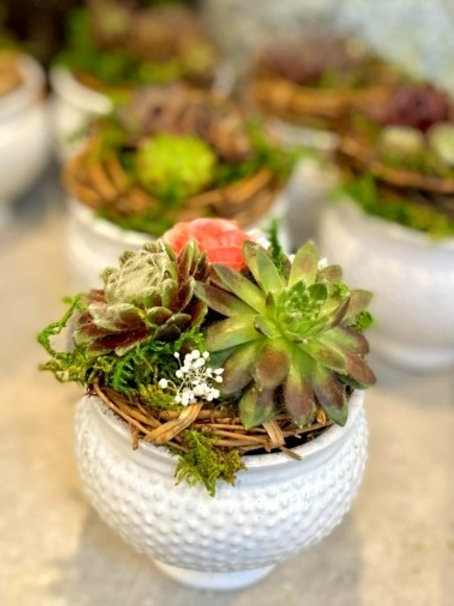 Hob Nob pot with hens and chicks, baby's breath and silk roses.