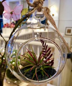 zen globe terrarium