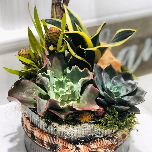 succulent planter in metal dish
