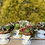 Thumbnail: milk glass compote w/ hens and chicks, preserved florals and holiday baubles!