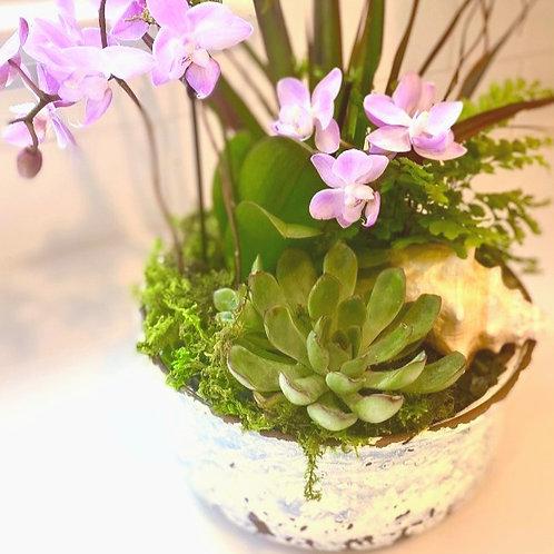 Blue speckled pot/Orchid/succulent arrangement