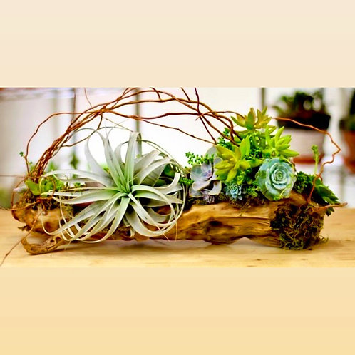 Large African Driftwood with airplant and succulents