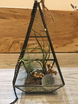 pyramid metal lantern with airplant