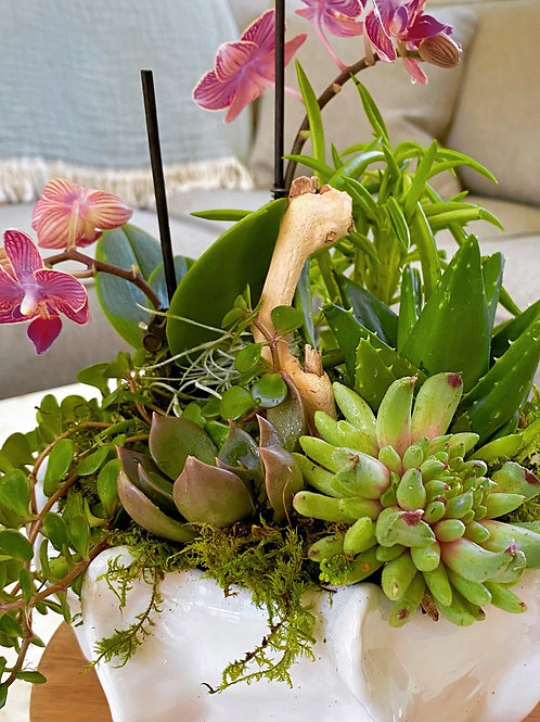 White cache pot with orchid and succulents
