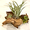 Thumbnail: Mahopi driftwood with airplants and succulent design