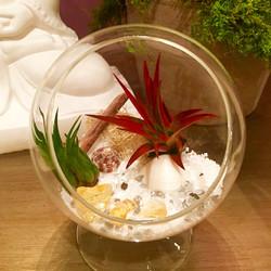 zen terrarium with citrine