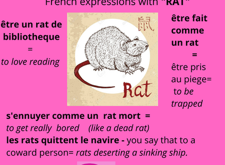 Le rat dans les expressions