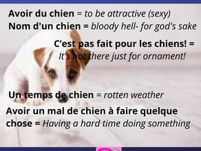 """Des expressions avec le mot """"chien"""""""