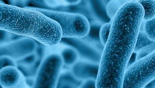 Legionella Investigations & Risk Assessments