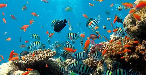 cuidar-oceano.png