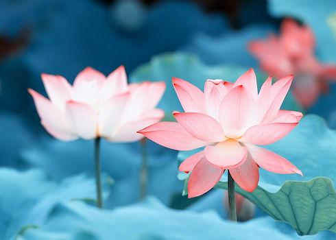 Lotus_edited.jpg